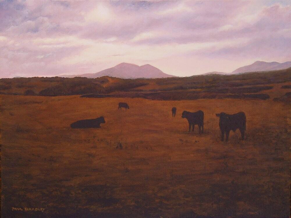 BLACK BULLS OF LLYNN,LOOKING TOWARDS DINAS by PAUL BRADLEY