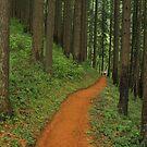 Forests Friends by Dan Jesperson