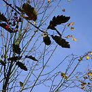 Flying South - autumn leaves, Burntisland by armadillozenith