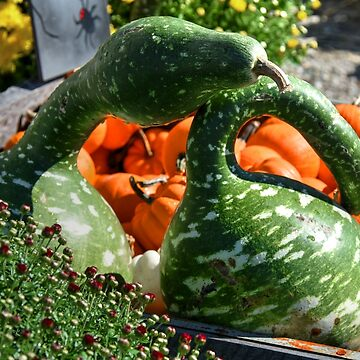 Swan Gourds.....and their Guests! by Poete100