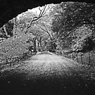 West Side Bridle Path by Marjorie Smith