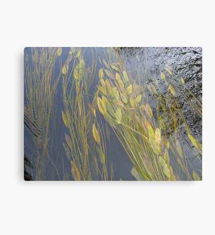 Plants Under Water in the River Canvas Print