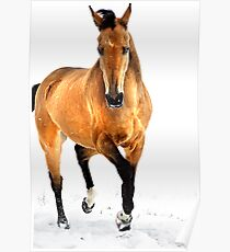 golden horse in snow Poster