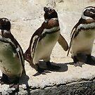Penguin Triplets by cebrfa