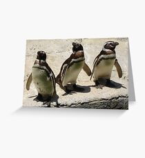 Penguin Triplets Greeting Card