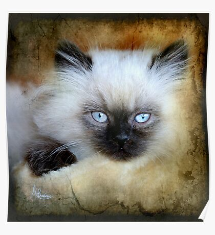 Little Blue Eyes Poster
