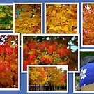 The 7 Stages of our Fallen Maple Leaves.. by Larry Llewellyn