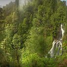 Rainforest, Tarkine, Tasmania by Kevin McGennan