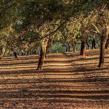 Canberra Cork Plantation 07 by fotoWerner