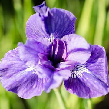 Purple flower by photosbygemmad