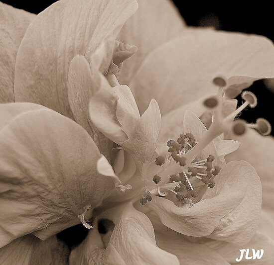 simplistic beauty by jweekley
