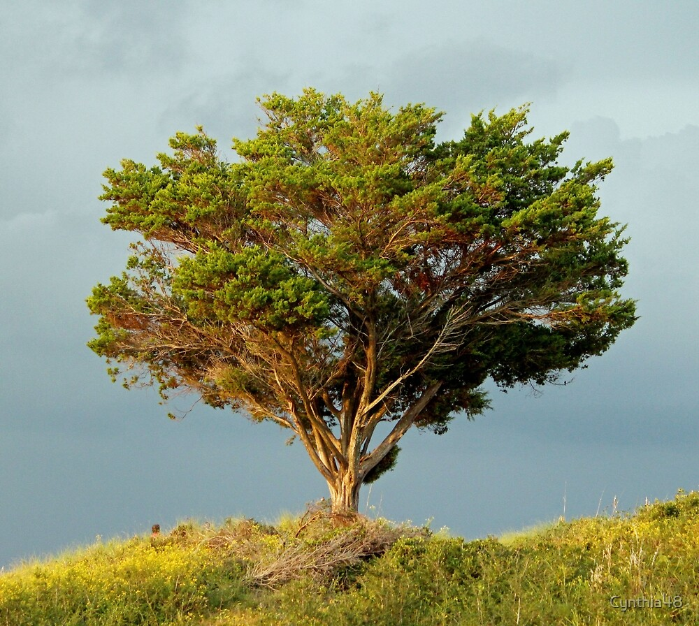 One Tree On A Hill by Cynthia48