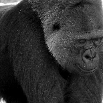 face of captivity by jweekley