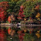 Harriman Fall Colors by photoloi