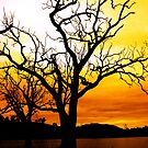 golden branches by Josh Prior