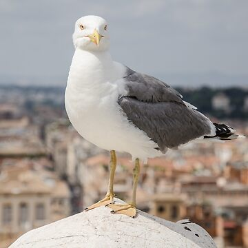Seagull in Rome by photosbygemmad