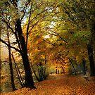 Woodland Walking by Jessica Jenney