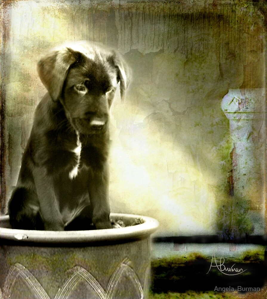 Paws For Thought by Angela  Burman