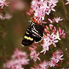 Butterfly bliss. by Steve Chapple