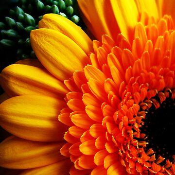Orange Flower One by yvonnecarsley