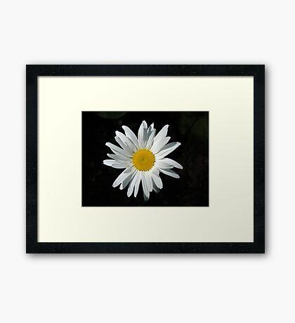 Daisy... Daisy Framed Print