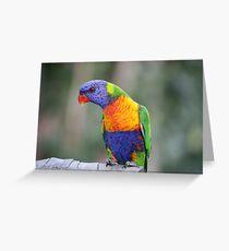 Rainbow Lorikeet   (Trichoglossus haematodus ) Greeting Card