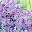 Yesterday's Lilac by Astrid Ewing Photography