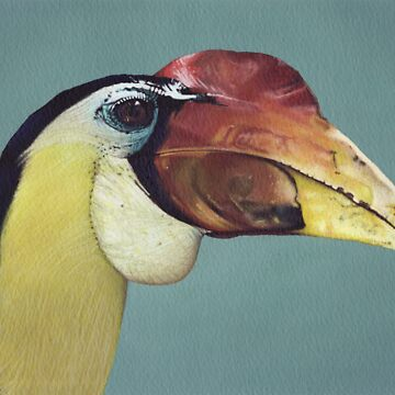 Wrinkled Hornbill by PottyScotty