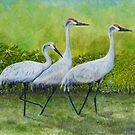 Sandhill Cranes by Brad A. Thomas