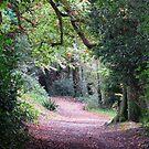 Woodland path by Caroline Anderson
