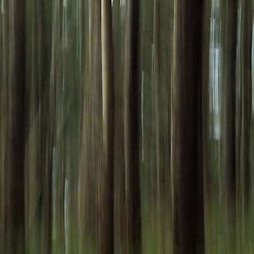 Forest Blur by amckinnell