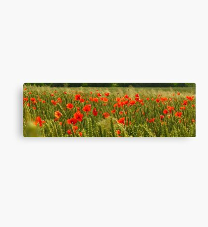 Fields of Hungary Canvas Print
