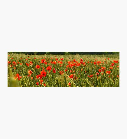 Fields of Hungary Photographic Print