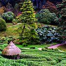 Glendurgan Maze by AndyReeve