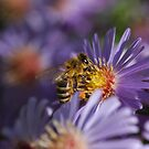 Bee Collecting Pollen by LOJOHA