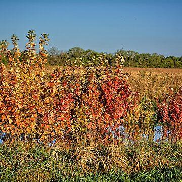 Beginnings Of Autumn by LynyrdSky