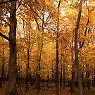 Golden Forest by Jarede Schmetterer
