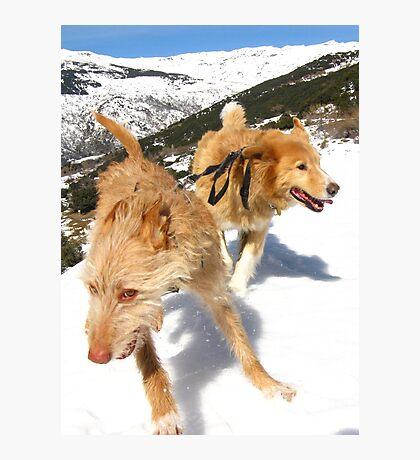 Snow stompin' in the alpujarras, Spain Photographic Print