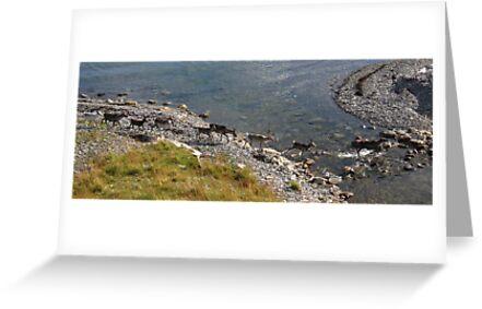 Arctic Splash, Norway by Fin Gypsy