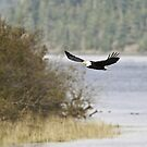 Returning to the Eagle Tree after the Picnic by David Friederich