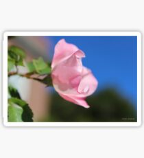 Pink Rose Blue Sky Sticker