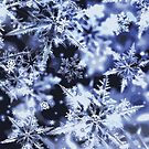 3D Snowflakes by savesarah
