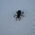 Beetle by BLAMB