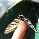 Flutter by BLAMB