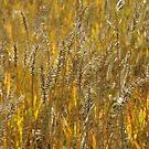 Fall Grass by Robert W. Spath II