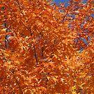 Glorious Autumn Red Oak Leaves by Robert W. Spath II