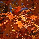 Red Oak Leaves Clustered by Robert W. Spath II