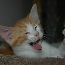 Hands up Orange Tabby! by LOJOHA