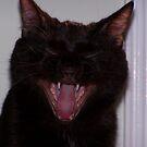 Hey You Cat!! by LOJOHA