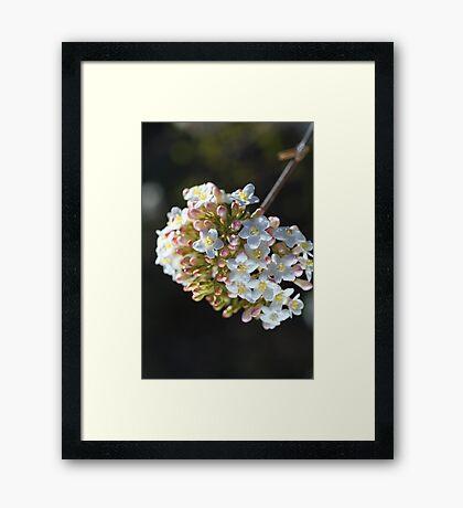 Circle Of Spring Framed Print